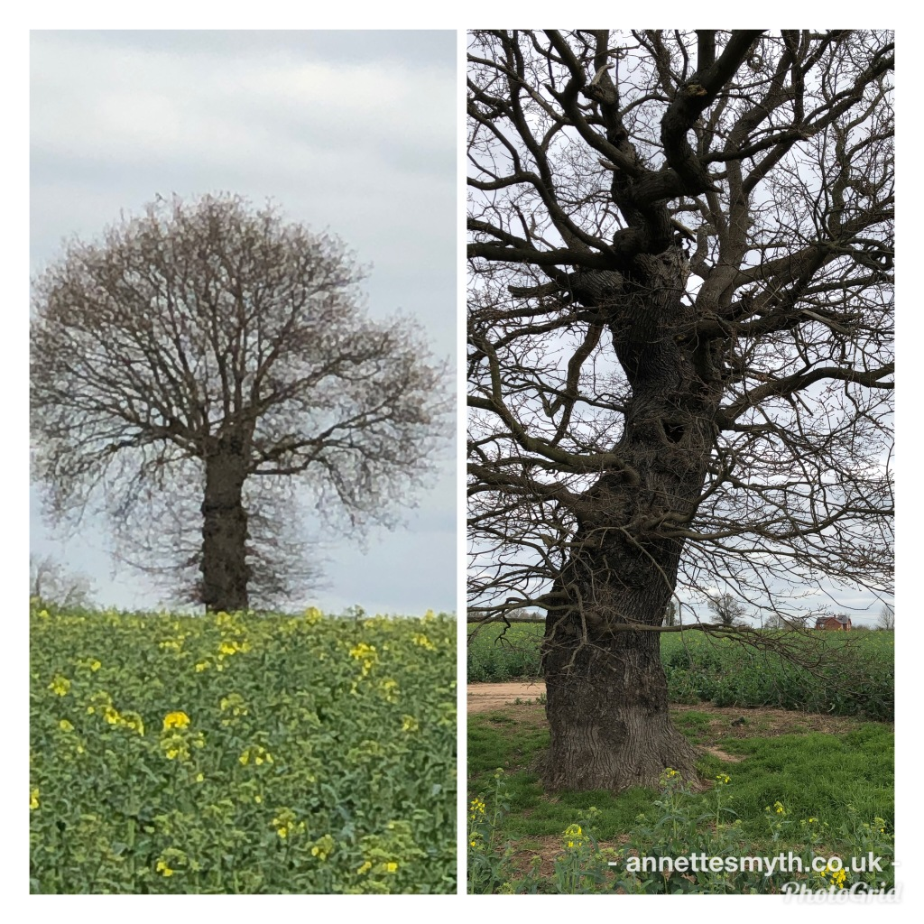 Trees - powertex inspiration
